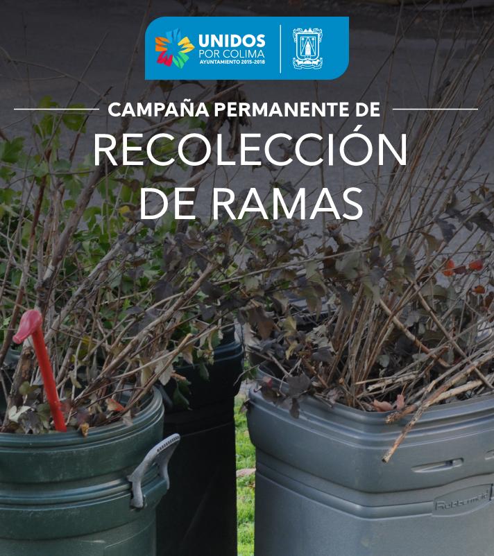 Recolección de Ramas -