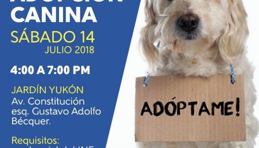 Ayuntamiento capitalino invita a Feria de Adopción Canina y Felina, este sábado -